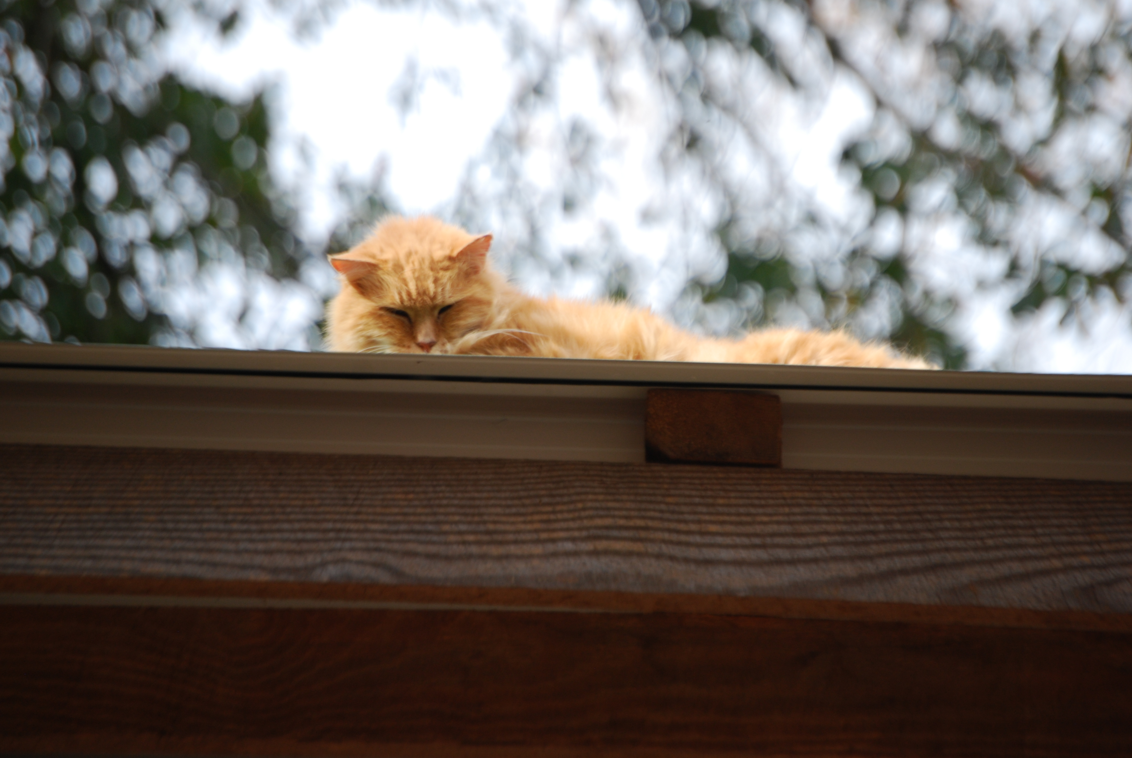 Cats, cat on a roof