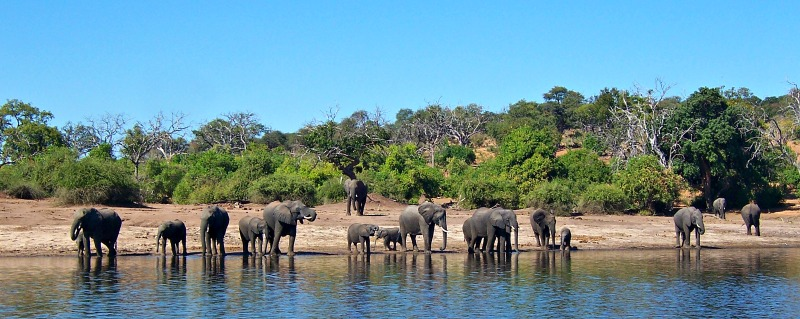 Africa, Zambia, elephants, safari
